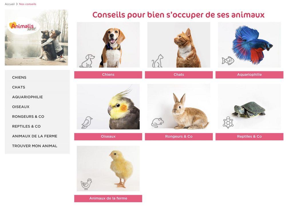 Les conseils d'Animalis pour le soin de vos animaux